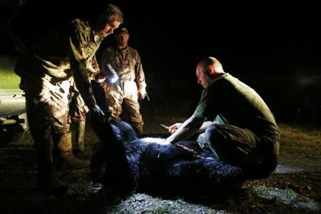 Wayne Plummer bent down to field dress a bear for a hunter after the first day of bear hunting in Kokadjo, Maine. Hunters pay him $2,000 a week to guide them to a clear shot.
